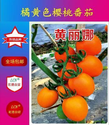 山东省潍坊市寿光市黄丽娜 ≥99% 杂交种 ≥97%
