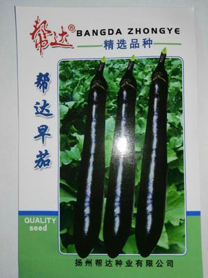 江苏省宿迁市沭阳县茄子种子  ≥85% 常规种 帮达早茄
