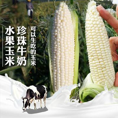 陕西省咸阳市秦都区糯玉米 去壳 甜糯