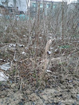 这是一张关于怀远白花玉石籽石榴 的产品图片
