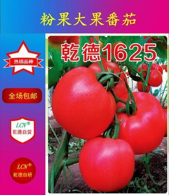 山东省潍坊市寿光市早春粉果乾德1625 ≥96% 杂交种 ≥85%