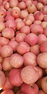 这是一张关于红富士苹果 75mm以上 条红 光果 的产品图片
