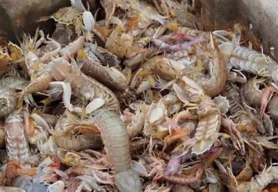 这是一张关于皮皮虾 的产品图片
