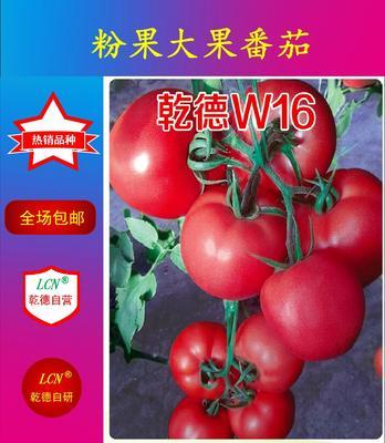 山东省潍坊市寿光市硬粉大果乾德W16 ≥96% 杂交种 ≥85%