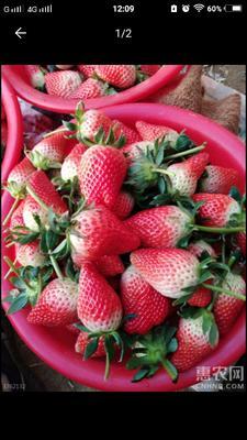 这是一张关于甜宝草莓 30克以上 的产品图片