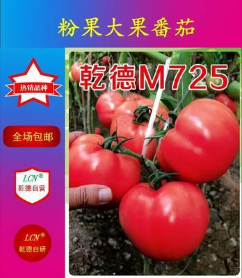 山东省潍坊市寿光市乾德M725 ≥98% 杂交种 ≥97%