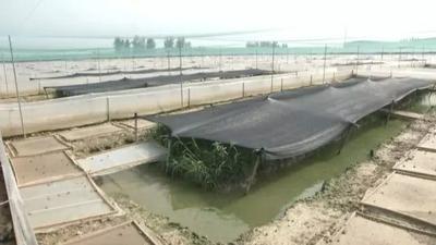 江西省抚州市南城县青蛙
