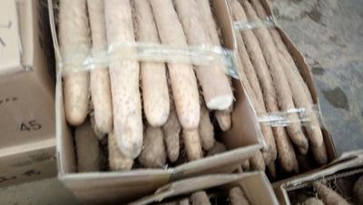 这是一张关于麻山药 70~90cm 的产品图片