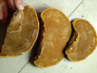 这是一张关于桑黄 的产品图片