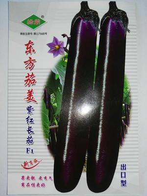 江苏省宿迁市沭阳县茄子种子  杂交种 ≥85% 东方茄美