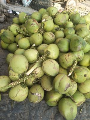 这是一张关于椰青 4 - 5斤 的产品图片