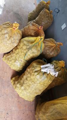 陕西省汉中市南郑县魔芋种子