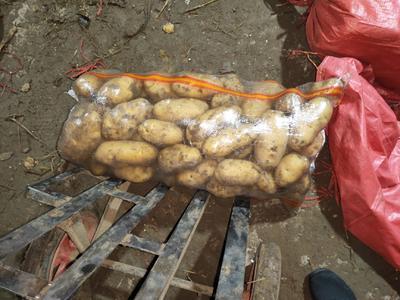 这是一张关于226土豆 4两以上 的产品图片