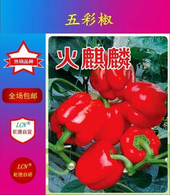 山东省潍坊市寿光市红彩椒火麒麟 杂交种 ≥97%