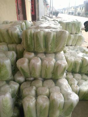 山东省枣庄市滕州市高白大白菜 3~6斤 净菜