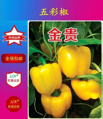 山东省潍坊市寿光市黄彩椒金贵 杂交种 ≥97%