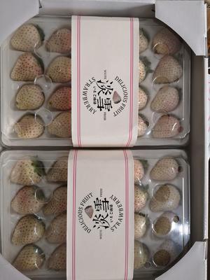广东省广州市白云区淡雪草莓 50克以上