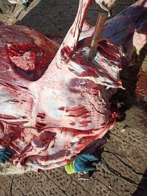 山东省菏泽市牡丹区牛肉类 生肉