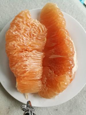 四川省内江市东兴区金橙柚 2斤以上