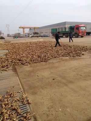 这是一张关于安丘生姜 2~4两 带土 的产品图片