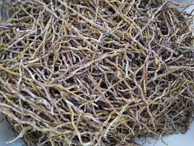 这是一张关于铁皮石斛 的产品图片