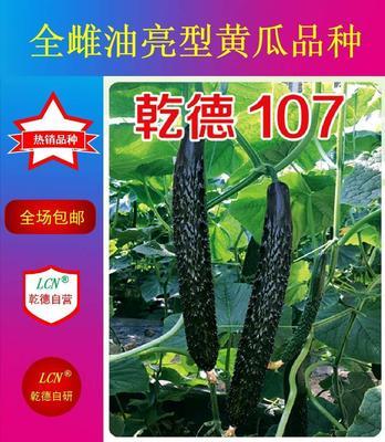 山东省潍坊市寿光市乾德107 杂交种 ≥97%