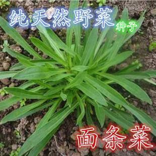 这是一张关于面条菜种子  蔬菜种子的产品图片