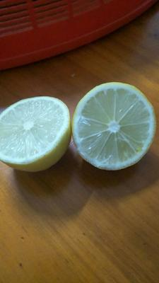 广西壮族自治区梧州市藤县香水柠檬 3.3 - 4.5两