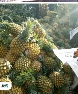 海南省海南省定安县海南菠萝 2 - 2.5斤