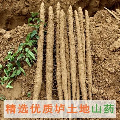 湖南省长沙市长沙县铁棍山药 40~50cm