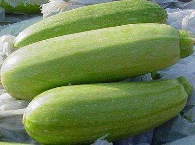 江苏省宿迁市沭阳县绿皮西葫芦种子  占瓜种子