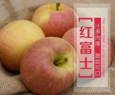 湖南省长沙市长沙县红富士苹果 70mm以上 片红 纸袋
