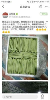 四川省成都市武侯区白皮豆角种子 ≥85%