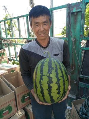 这是一张关于甜王西瓜 10斤打底 9成熟 1茬 有籽 的产品图片