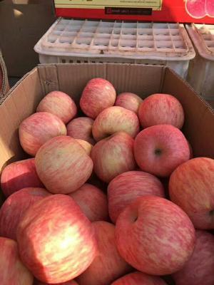 山东省淄博市沂源县红富士苹果 80mm以上 片红 纸袋