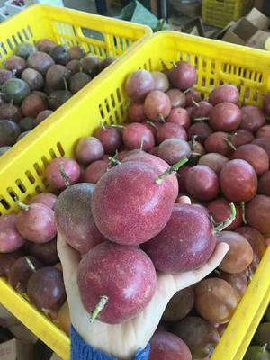广西壮族自治区玉林市北流市紫香一号百香果 60 - 70克