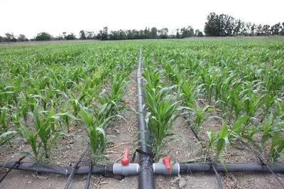 这是一张关于其它农资 的产品图片