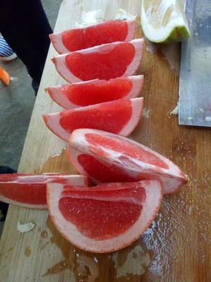 这是一张关于卡拉卡拉红肉脐橙苗 嫁接苗 0.5~1米 的产品图片