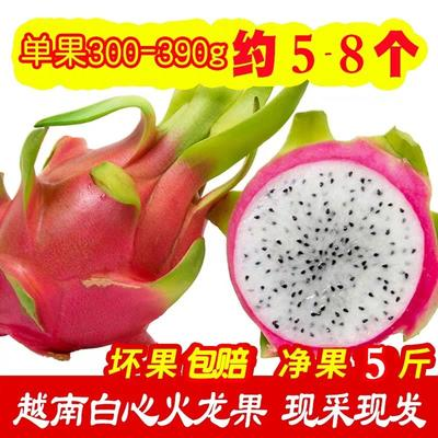云南省昆明市东川区红皮白肉火龙果 中(5-7两)