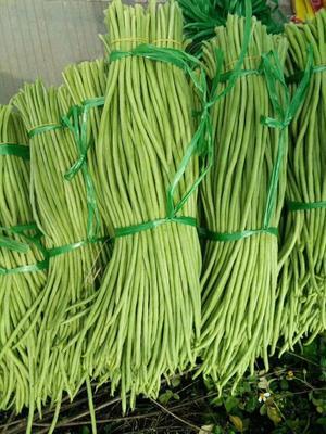广西壮族自治区北海市合浦县白花四季豆 15cm以上