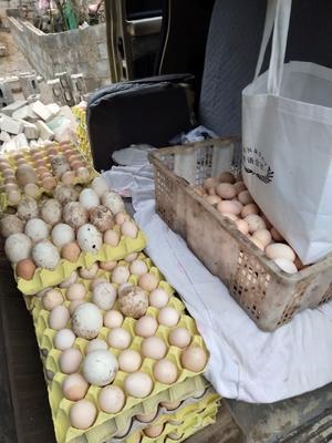 这是一张关于土鸡种蛋 孵化 箱装 的产品图片