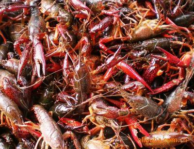 这是一张关于监利小龙虾 5-7钱 塘虾 的产品图片