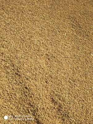 这是一张关于稻花香 晚稻 的产品图片