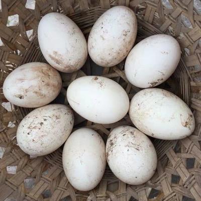 湖北省武汉市新洲区土鹅蛋 食用 箱装