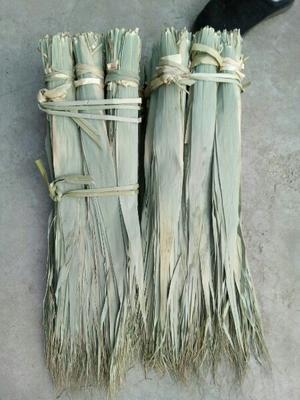 河北省邯郸市肥乡县粽子叶