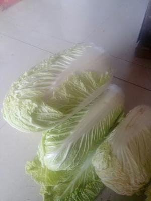 这是一张关于北京新三号 3~6斤 净菜 的产品图片