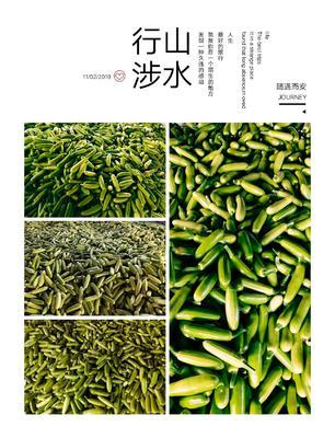 山东省潍坊市青州市绿皮西葫芦 0.5斤~1斤