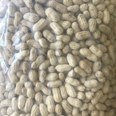 山东省临沂市沂水县带壳花生 花生米 干货