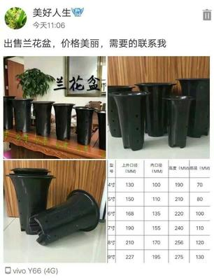 这是一张关于花盆 的产品图片