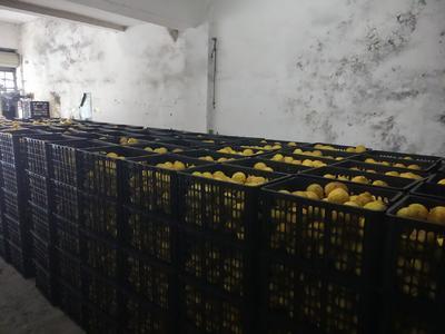 这是一张关于黄金贡柚 7 - 7.5cm 3两以上 的产品图片